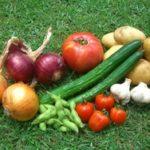 我が家の夏野菜たち