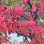 庭樹で楽しむ・紅葉狩り
