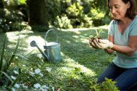 日陰を活かした庭造り!鮮やかな緑を楽しむシェードガーデンのつくり方