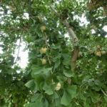 植栽のチカラ