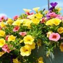 庭がなくても楽しめる!壁面を飾るおしゃれなウォールプランター