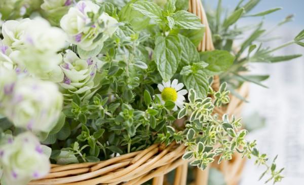 薬草に注目!体の不調を和らげてくれる薬草を育ててみよう
