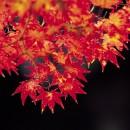秋の紅葉を楽しむ庭づくり