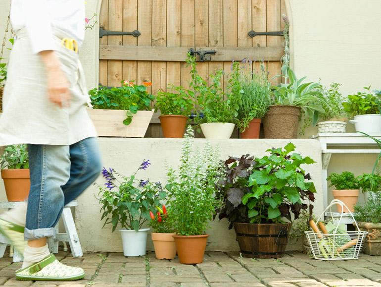 小さい庭で楽しむガーデニングアイデア