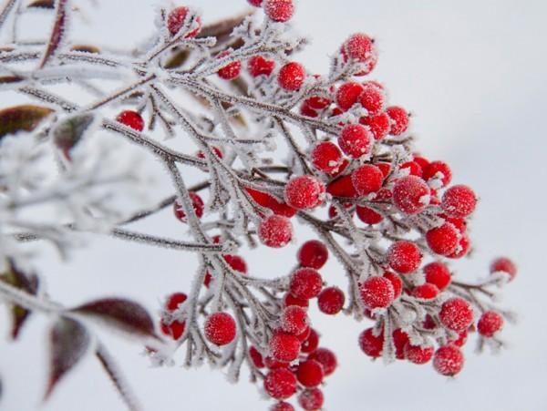 雪や霜柱から守る防寒対策