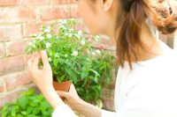 人も植物も元気になれる風通しのいい庭づくり