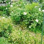 6月の植物