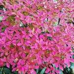 季節の植物