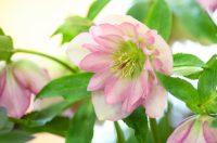 子どもたちも大喜び!冬に花が咲く庭
