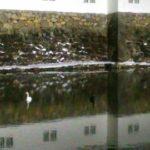 寒い日彦根城のお堀で・・・
