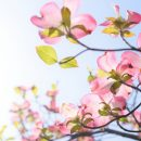 春の訪れを実感できる庭づくり