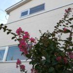 サルスベリの咲く季節